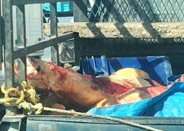 Captan camioneta con carne al aire libre en Bahía