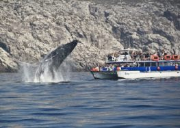 Buenas cifras en recorridos turísticos en barco por la Bahía