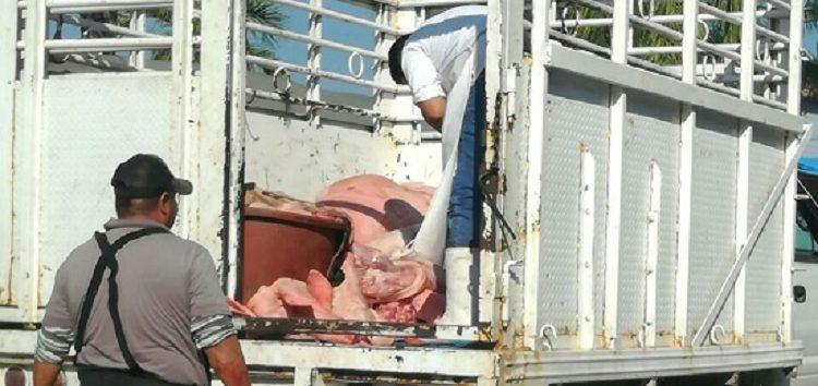 Trasladan carne del rastro municipal de Bahía en camionetas inadecuadas