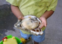 Moluscos perfectamente consumibles: buzos