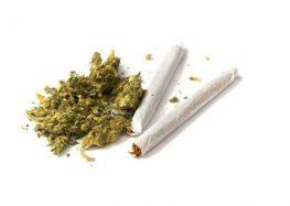 Legalizar consumo de mariguana con fines recreativos acotaría violencia en universidades