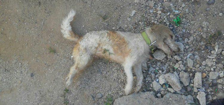 Envenenan a perros y gatos en Villas de San Vicente