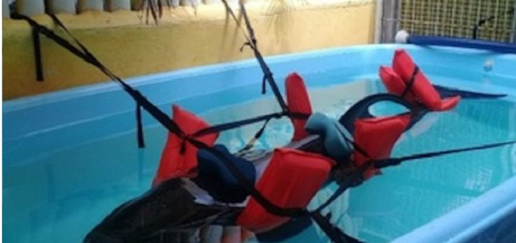 Rescatan a delfín varado en las playas de Sayulita