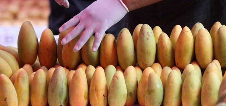 Nayarit proyecta planta para procesar 2 millones de toneladas de mango