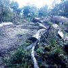 "Denuncian tala de árboles en la rivera del ""Huichichila"", San Juan de Abajo"