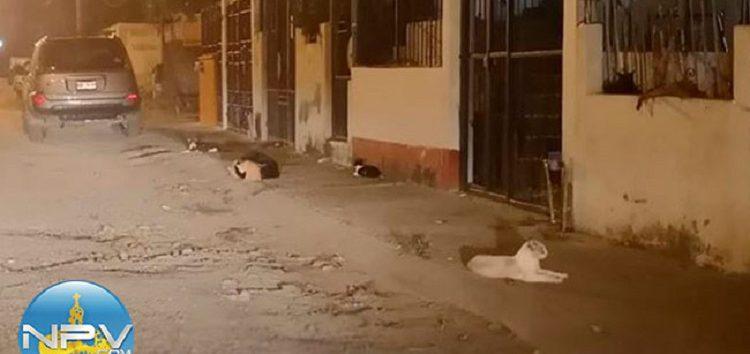 Gatos viven en precarias condiciones en domicilio de Valle Dorado