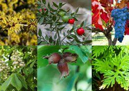 Cofepris autoriza el uso de 18 plantas medicinales de tipo herbolario