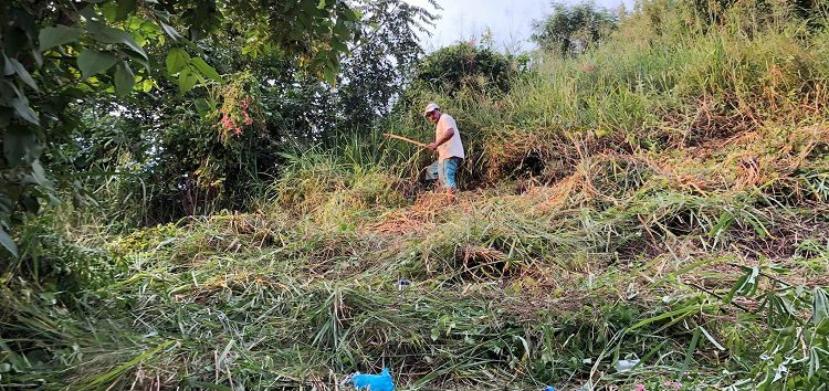 Tras limpieza en panteón de San Pancho, encuentran enorme culebra