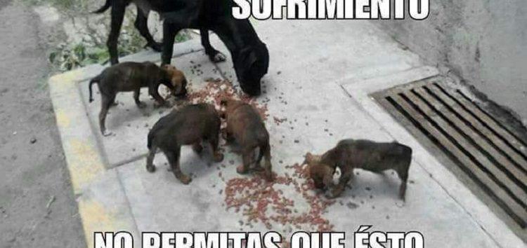 Urgente vacuna antirrábica en Bahía de Banderas para perros