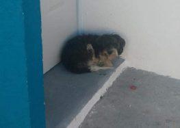 """Perros domésticos y callejeros infestados de garrapatas en """"Paraíso Vallarta"""""""